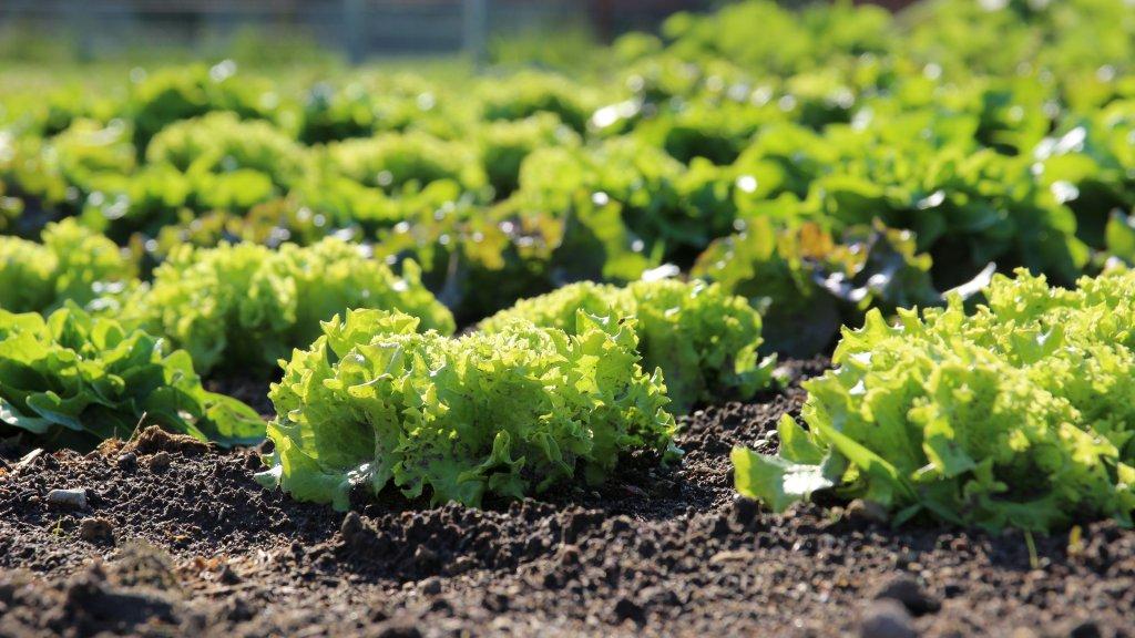 Geniessenschaft Gemüsebeet