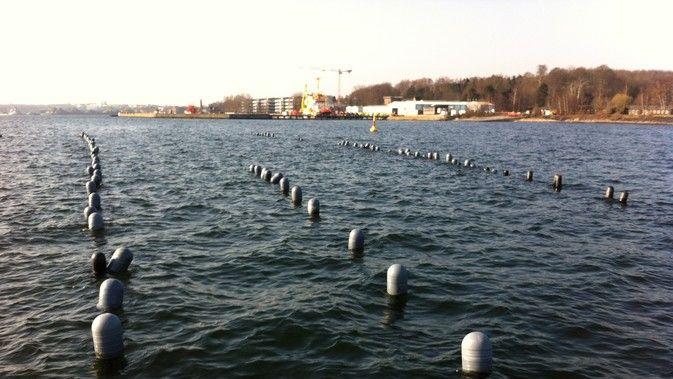 Geniessenschaft Kieler Meeresfarm